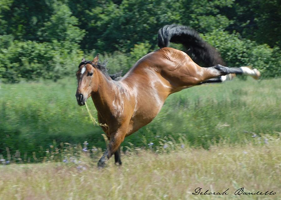 pferde frei