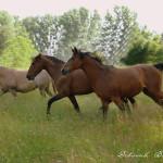 Pferde in Freiheit